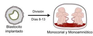 mono-mono